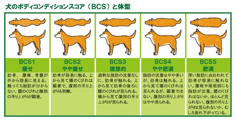 ボディコンディショニングスコア(BCS)